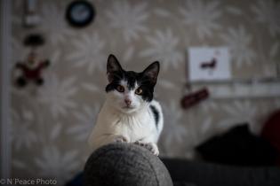 Henrys smukke katte